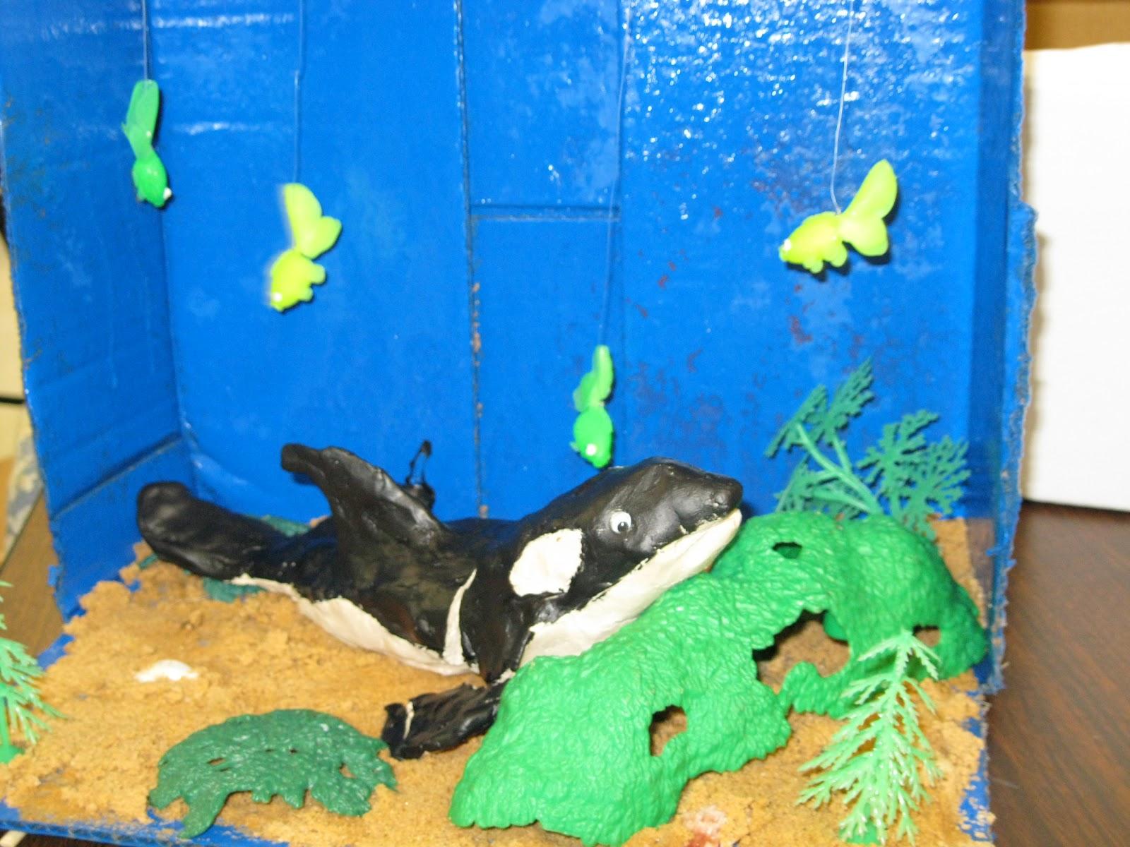 Mrs Ussery S Second Grade Class Animal Dioramas